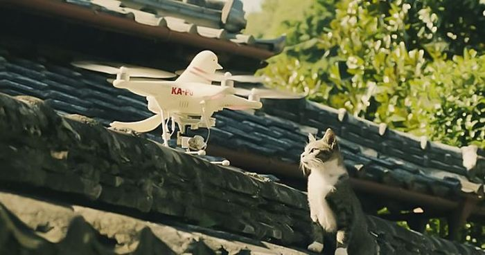 kirin pigeon drones beer japanese design advertising technology